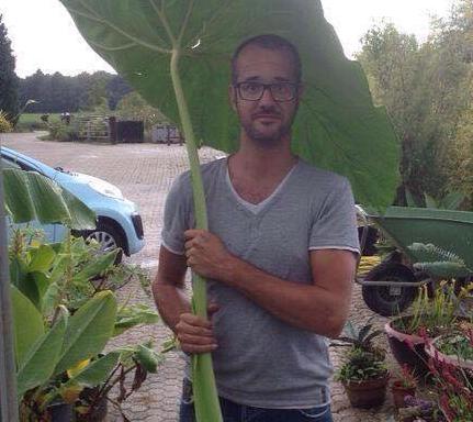 Colocasia `Jack`s Giant`