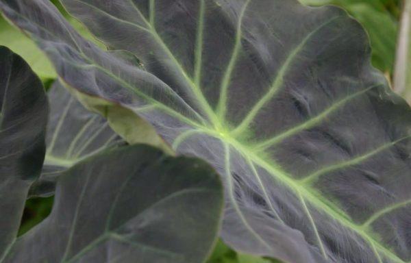 Overige planten